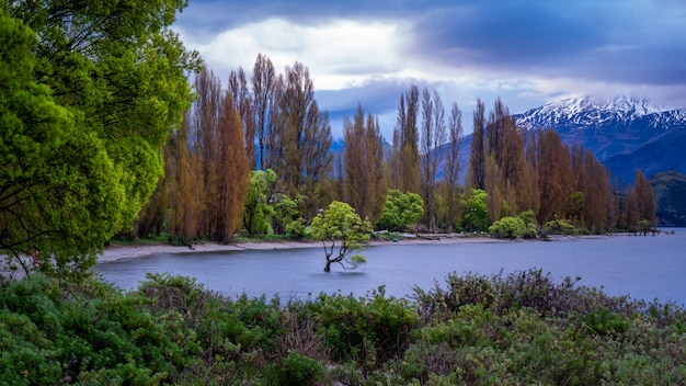 Wanaka tree met lake mountain view
