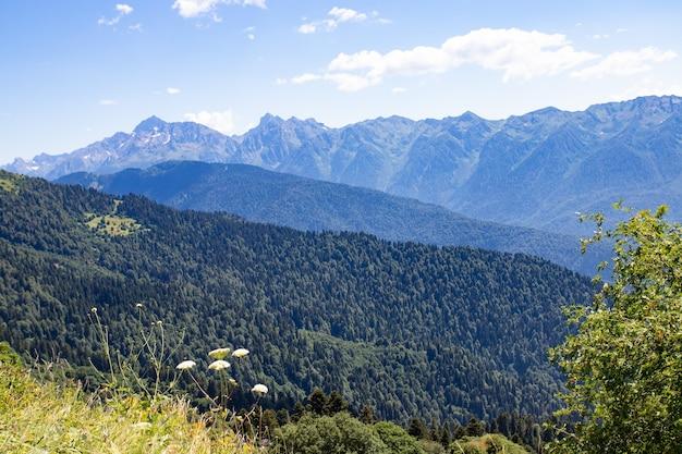 Wandelaar geniet van het landschap van de bergen tijdens een wandeling naar de top in de zomer tussen de weilanden.