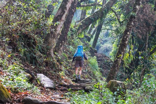 Wandelaar in de jungle van de himalaya, nepal, regio kanchenjunga