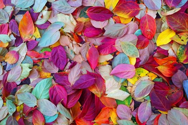 Wandelen in de herfst tussen de gekleurde bladeren