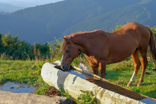 Wandelen in de natuur in de bergen drinkt water uit een houten goot.