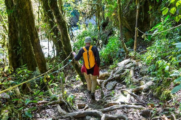 Wandelen in groene tropische jungle, costa rica, midden-amerika