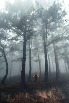 Wandelen in het mistige dennenbos in de zomerochtend