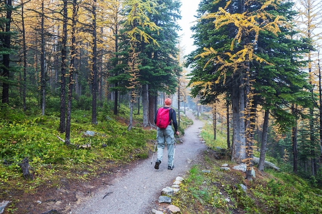 Wandelende man in canadese bergen. wandeling is de populaire recreatieactiviteit in noord-amerika. er zijn veel pittoreske paden.