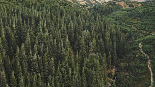 Wandelpad bij bergbos op heuvel