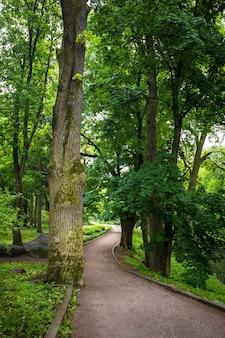 Wandelpad in het park met grote bomen