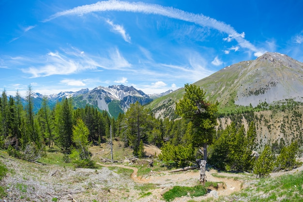 Wandelpad kruising hoge naaldbossen bos met besneeuwde berg. queyras regional parc, col d'izoard, franse alpen.