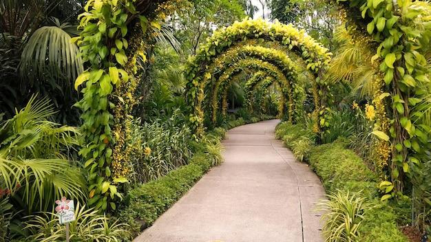 Wandelpad met grote bogen bedekt met groene struikbladeren in tropisch park
