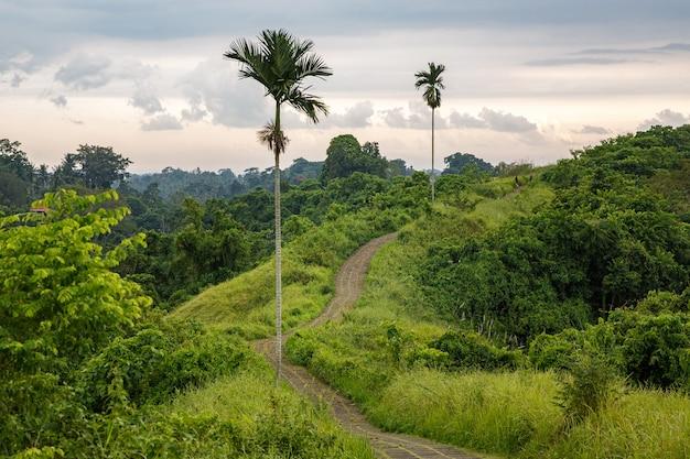 Wandelpad tussen palmbomen.
