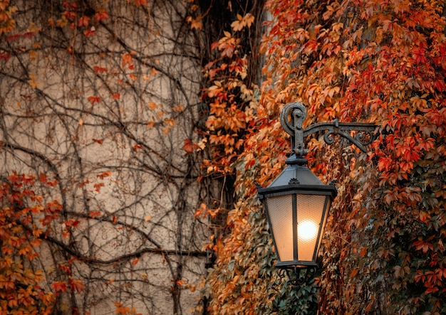 Wandlantaarn en virginia klimplant op straat in de herfst