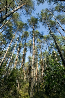 Warm en zonnig weer in het herfstseizoen in een gemengd bos waarin verschillende soorten en soorten bomen groeien.