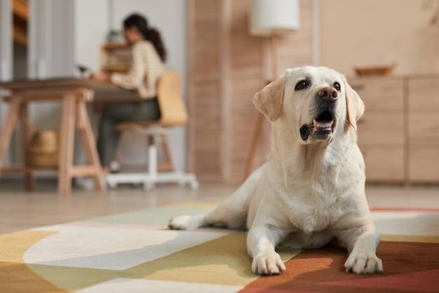 Warm getinte vooraanzicht portret van witte labrador hond liggend op tapijt in gezellig interieur verlicht door zonlicht met vrouwelijke eigenaar die op de achtergrond werkt, kopieer ruimte