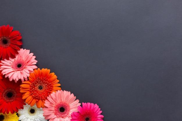 Warme kleuren van gerberabloemen op zwarte achtergrond