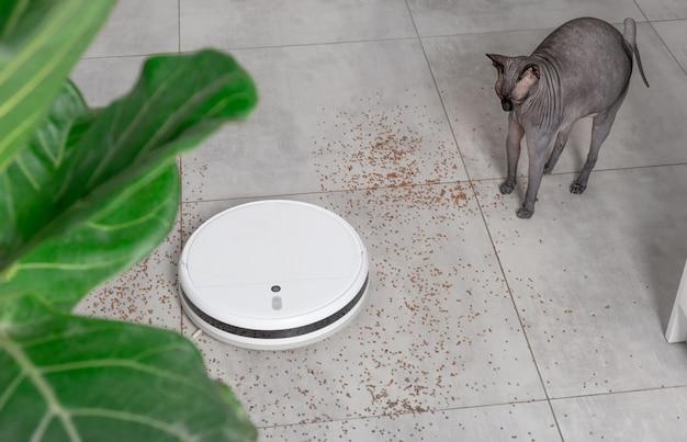 Wassen van witte robotstofzuiger die de vloer thuis schoonmaakt van kruimelsgrutten op utoniettegels in de keuken. grappige sphynx kale kat.