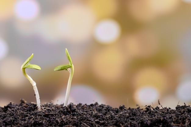 Water dat op de zaailing druipt. nieuw geboren plantje. het planten van boom in tuinhuis. red de aarde, red het leven.