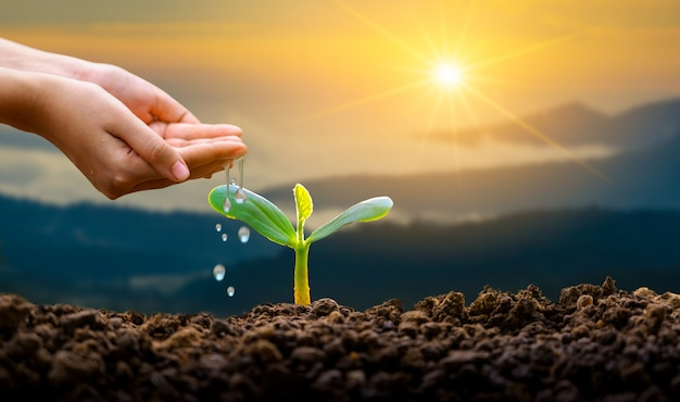 Water geven plant met de handen