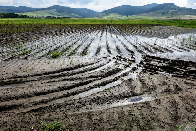 Water in het midden van overstroomde landbouwgewassen