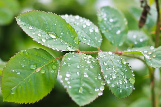 Water op bladeren