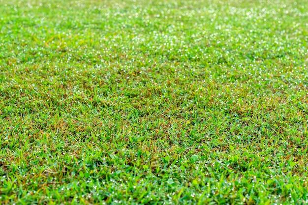 Water op het gras.