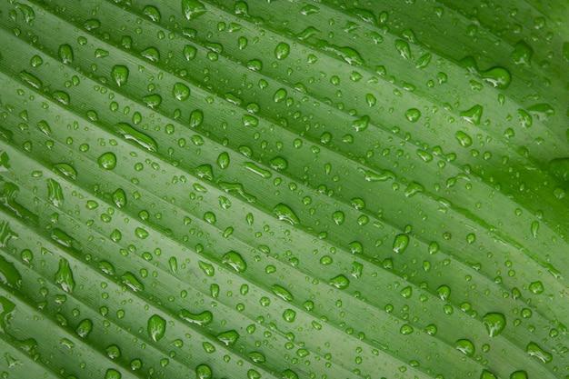 Waterdalingen op banaanblad backgroung