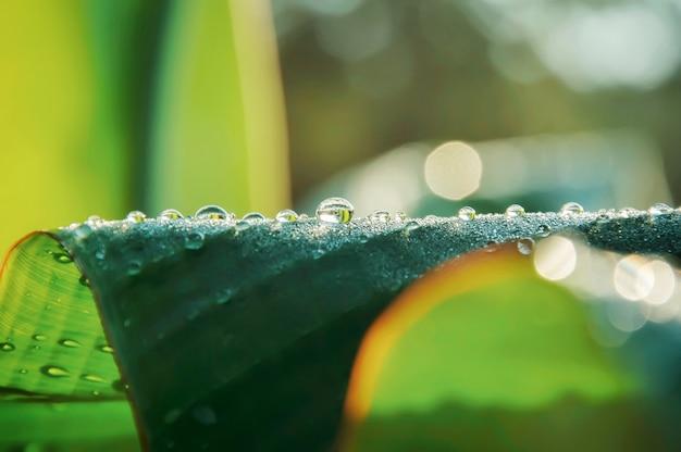 Waterdalingen op groen blad voor achtergrond.
