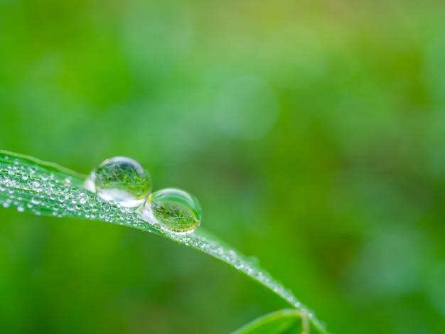 Waterdalingen op groen gras