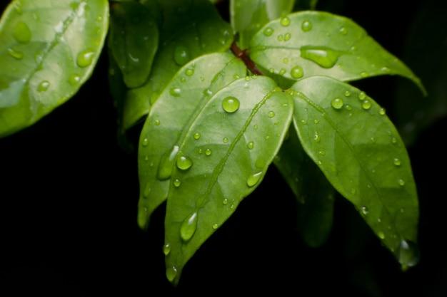 Waterdalingen op groene verse bladmacro