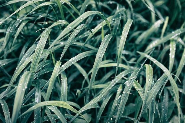 Waterdalingen op het groene gras