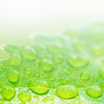 Waterdrops op een blad