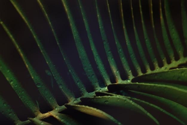 Waterdruppel op donker groen blad, abstrat gebladerte achtergrond