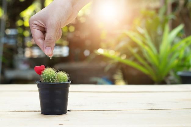 Waterdruppel op vinger in cactus op houten tafel onscherpe achtergrond