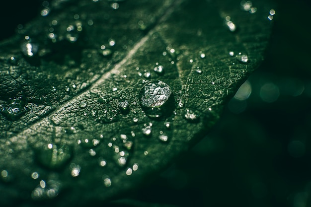Waterdruppels op blad. regendruppels op groen blad close-up.