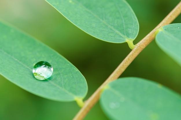 Waterdruppels op groene bladeren.