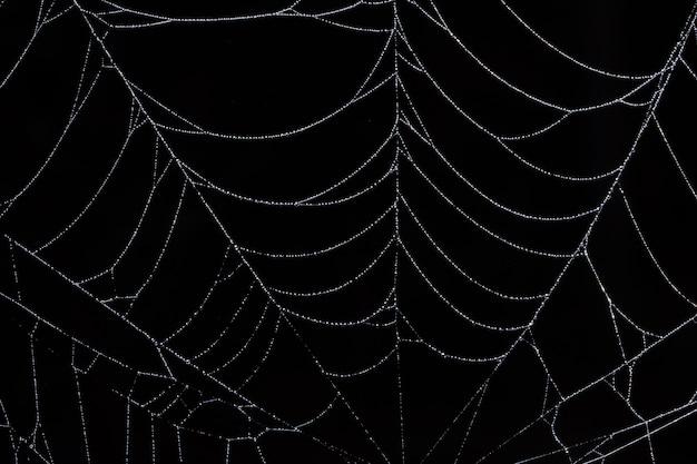 Waterdruppels op het spinnenweb.