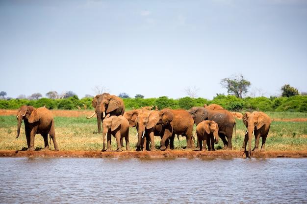 Waterhole in de savanne met enkele rode olifanten