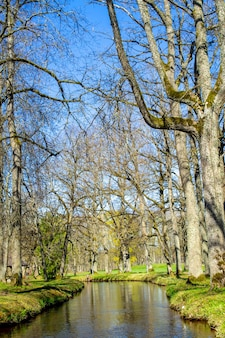 Waterkanaal in het park in ropazi. bomen zonder bladeren aan de oevers. vroege lenteaard in letland.
