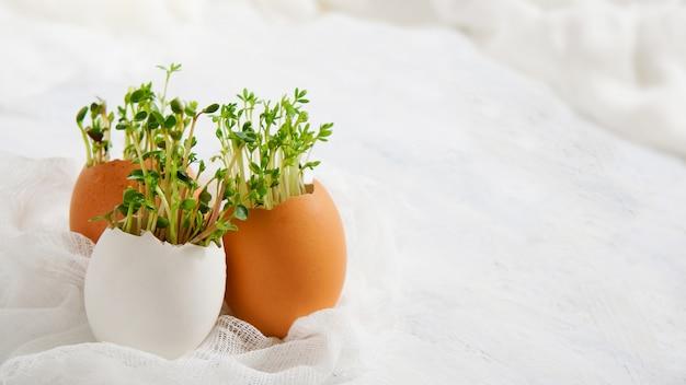 Waterkers salade en in eierschalen