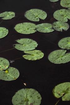 Waterleliebladeren in een meer
