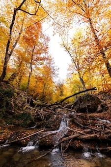 Waterval en bergrivier in het herfstbos