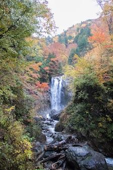 Waterval en bomen in de herfstseizoen van japan.