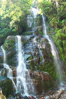 Waterval in het bos omgeven door groene bomen