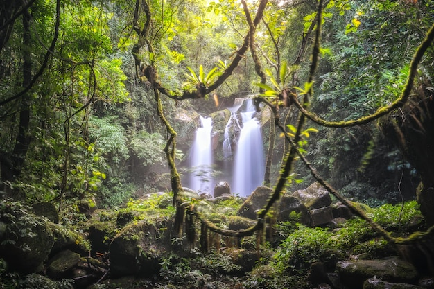 Waterval in het bos