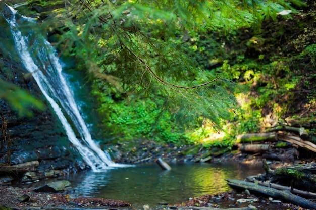 Waterval in het forest