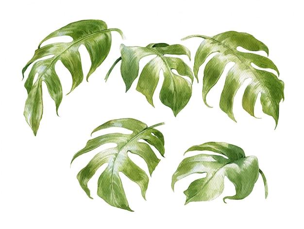 Waterverf het schilderen van bladeren op wit