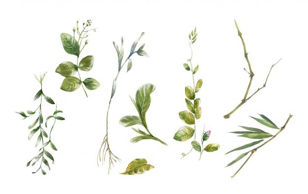 Waterverf het schilderen van bladerenillustratie op witte achtergrond