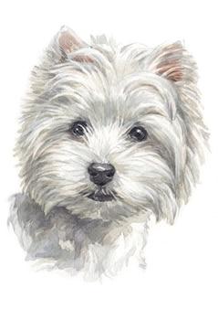 Waterverf het schilderen van het westenhoogland wit terrier