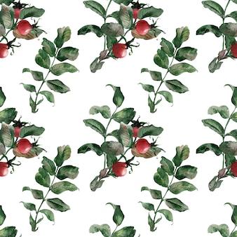 Waterverf naadloze patronen met rijpe heldere rozenbottel