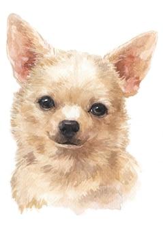 Waterverf schilderij van chihuahua