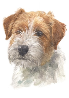 Waterverf schilderij van jack russell terrier