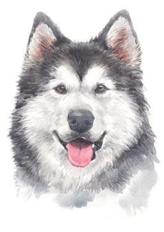 Waterverf schilderij van siberische husky
